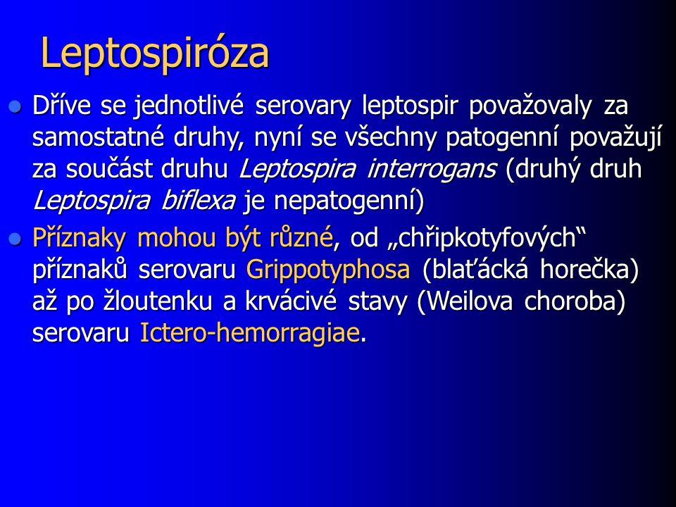 Leptospiróza