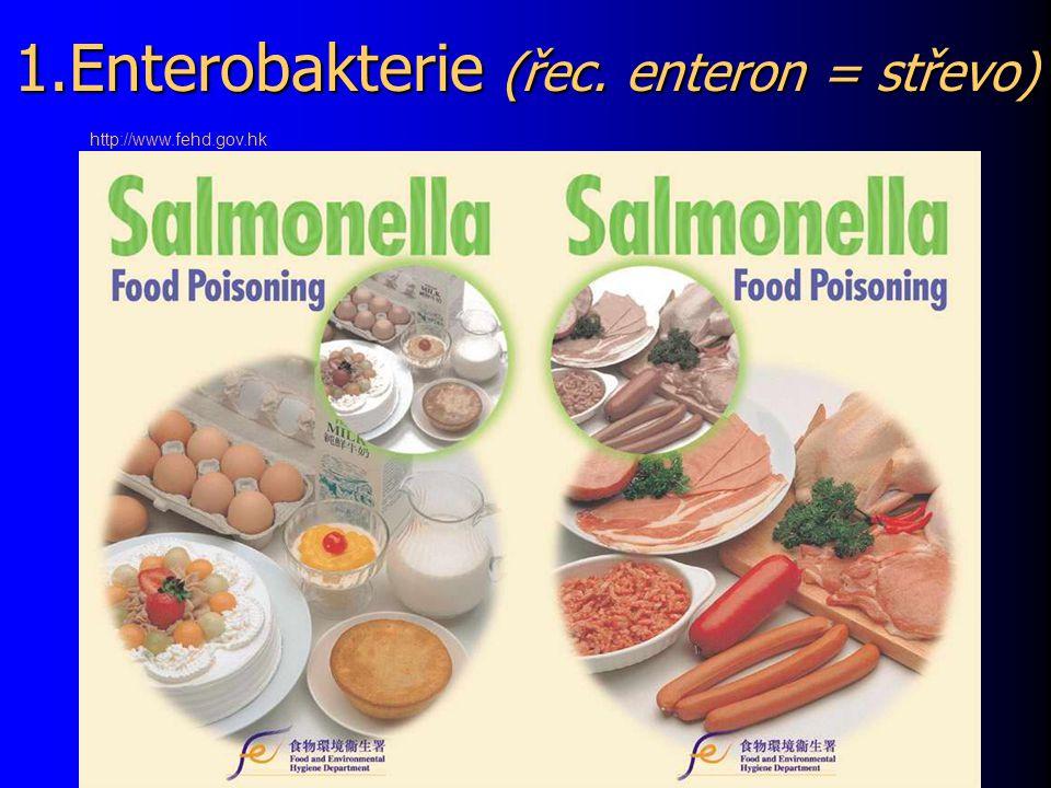1.Enterobakterie (řec. enteron = střevo)