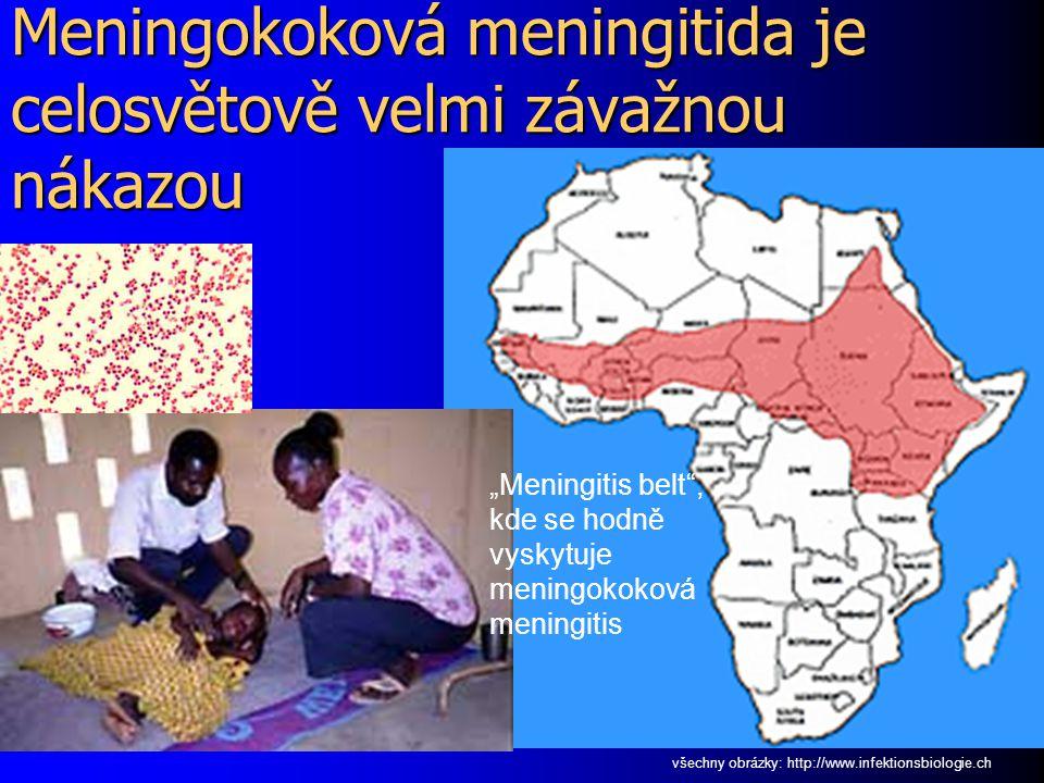 Meningokoková meningitida je celosvětově velmi závažnou nákazou