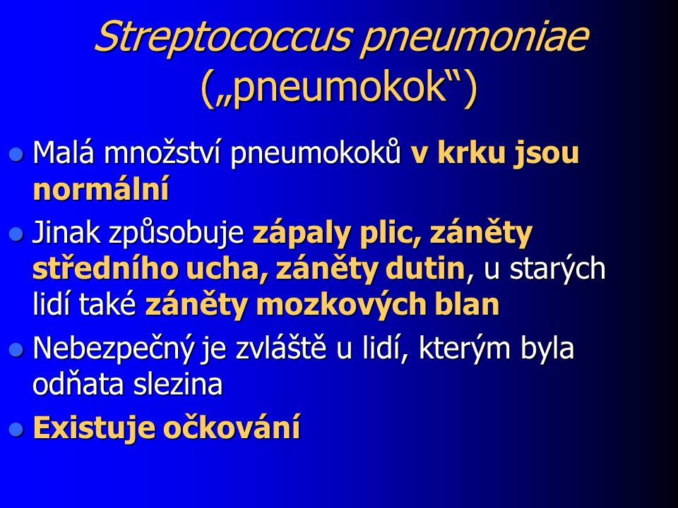 """Streptococcus pneumoniae (""""pneumokok )"""