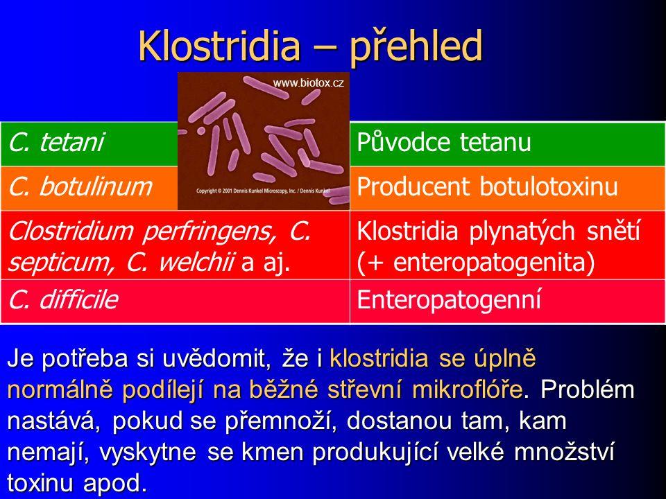 Klostridia – přehled C. tetani Původce tetanu C. botulinum