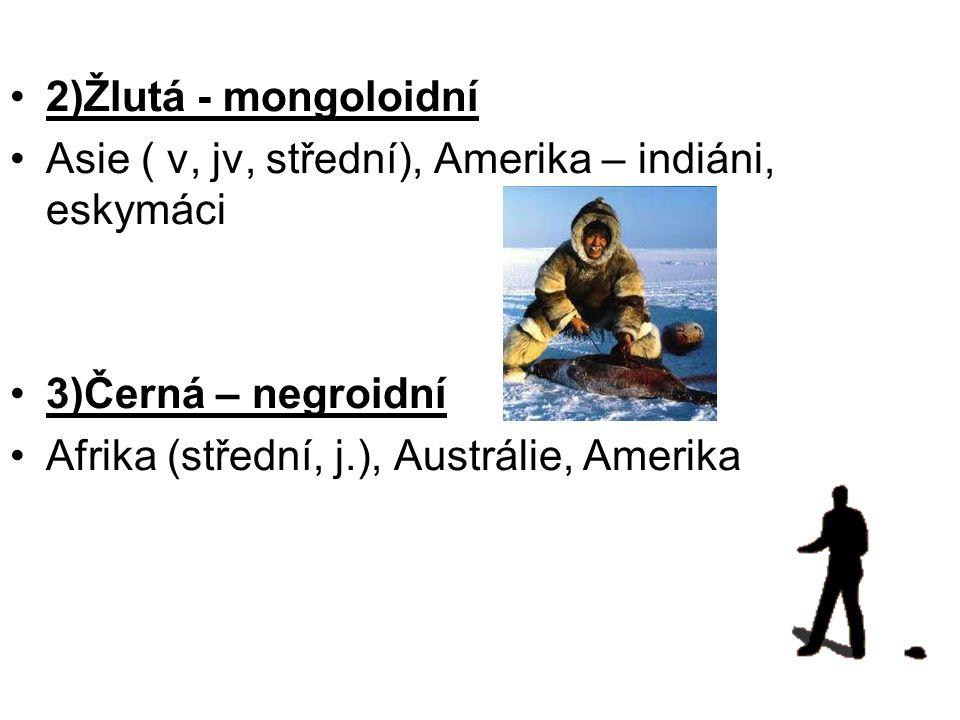 2)Žlutá - mongoloidní Asie ( v, jv, střední), Amerika – indiáni, eskymáci.