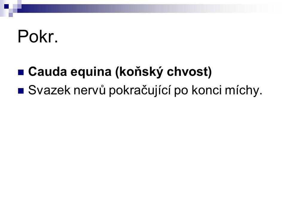 Pokr. Cauda equina (koňský chvost)