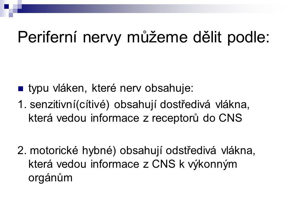 Periferní nervy můžeme dělit podle: