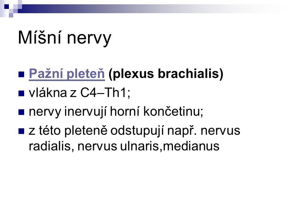 Míšní nervy Pažní pleteň (plexus brachialis) vlákna z C4–Th1;