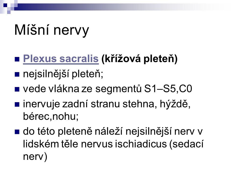 Míšní nervy Plexus sacralis (křížová pleteň) nejsilnější pleteň;
