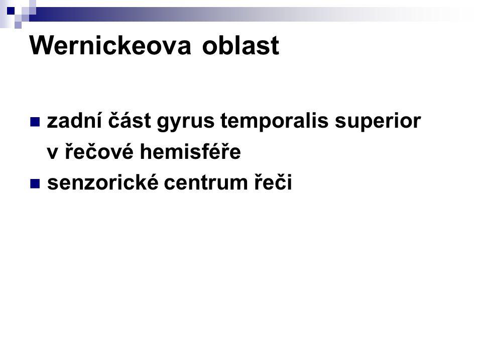 Wernickeova oblast zadní část gyrus temporalis superior