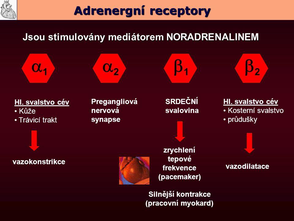 a1 a2 b1 b2 Adrenergní receptory