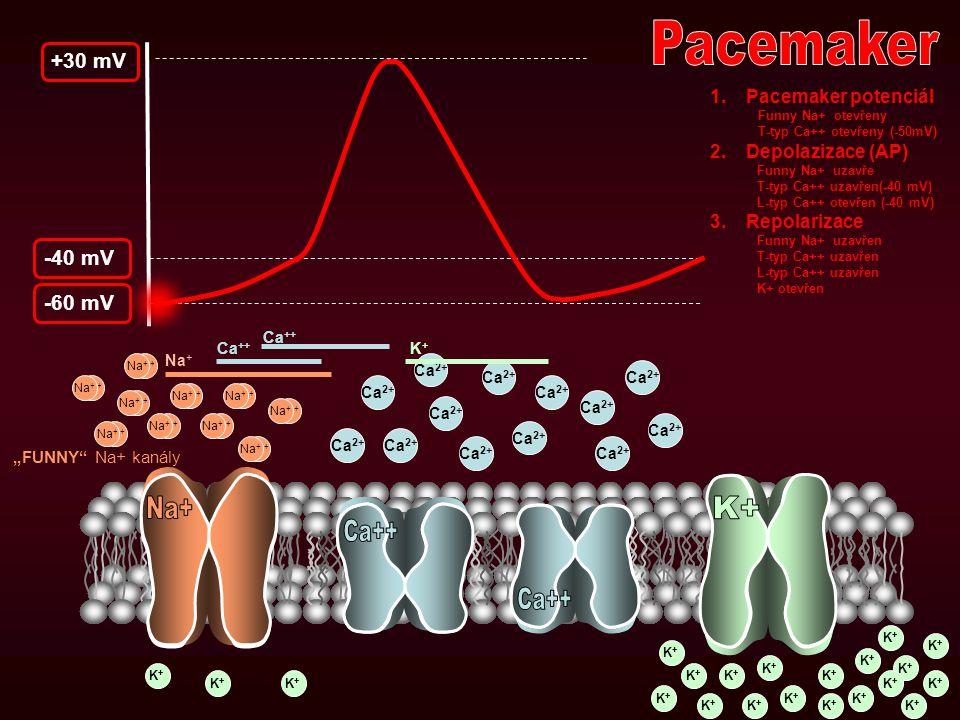 Pacemaker Na+ K+ Ca++ Ca++