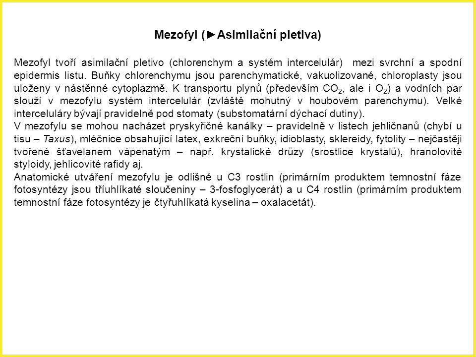 Mezofyl (►Asimilační pletiva)