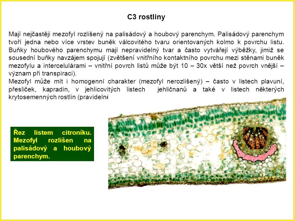 C3 rostliny