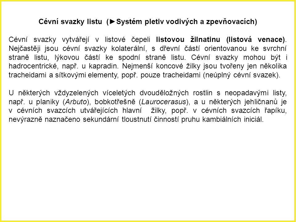 Cévní svazky listu (►Systém pletiv vodivých a zpevňovacích)