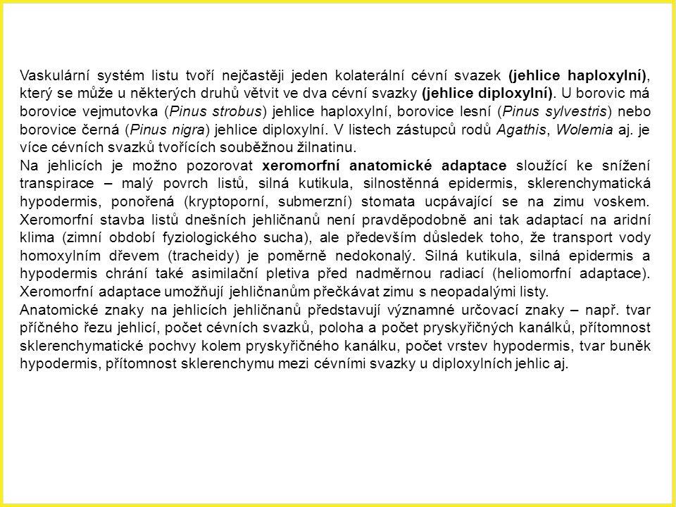 Vaskulární systém listu tvoří nejčastěji jeden kolaterální cévní svazek (jehlice haploxylní), který se může u některých druhů větvit ve dva cévní svazky (jehlice diploxylní). U borovic má borovice vejmutovka (Pinus strobus) jehlice haploxylní, borovice lesní (Pinus sylvestris) nebo borovice černá (Pinus nigra) jehlice diploxylní. V listech zástupců rodů Agathis, Wolemia aj. je více cévních svazků tvořících souběžnou žilnatinu.