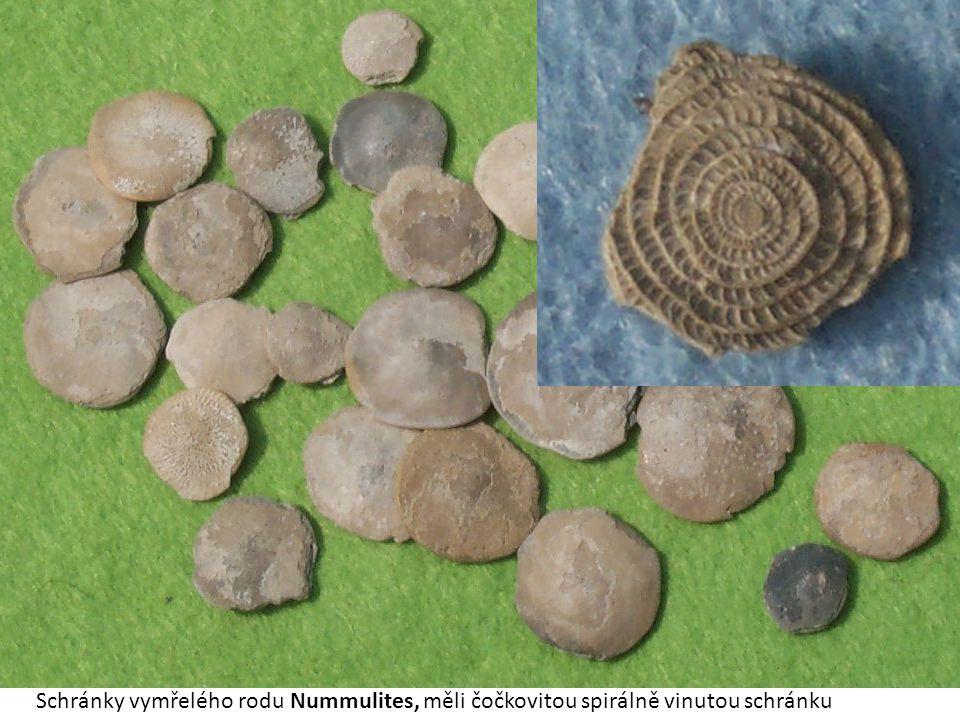 Schránky vymřelého rodu Nummulites, měli čočkovitou spirálně vinutou schránku