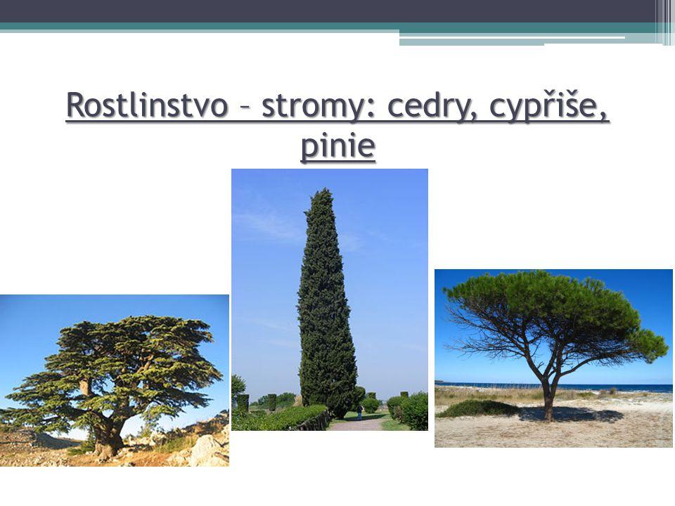 Rostlinstvo – stromy: cedry, cypřiše, pinie