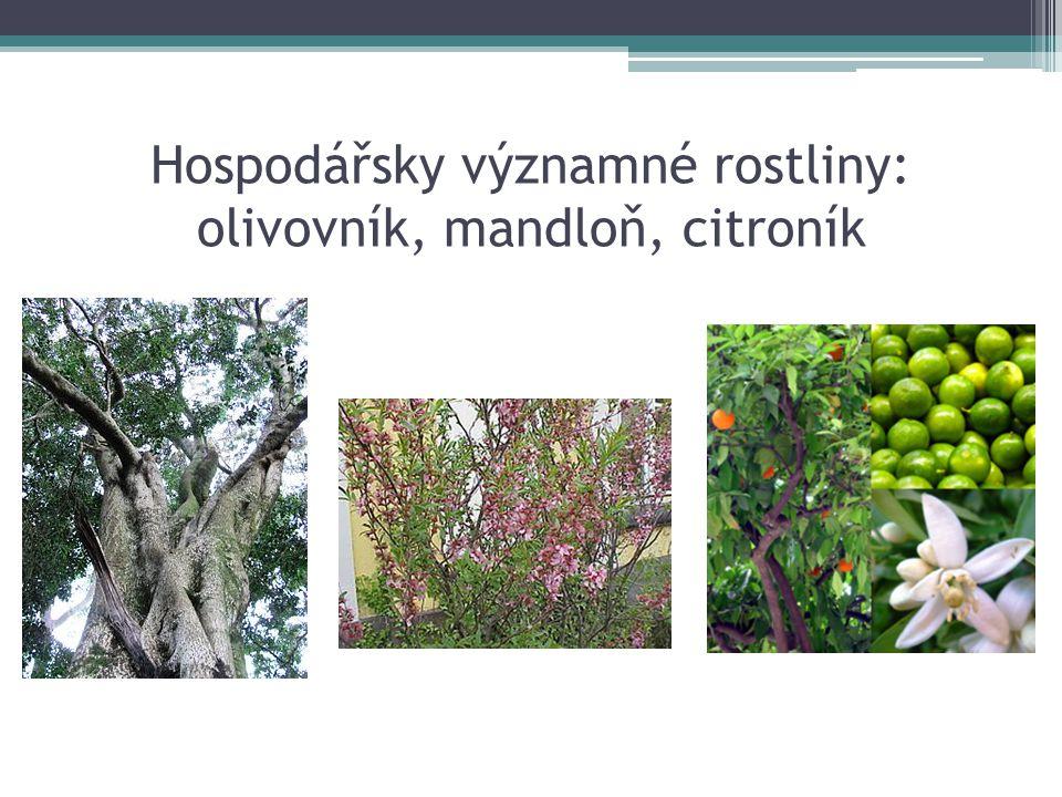 Hospodářsky významné rostliny: olivovník, mandloň, citroník