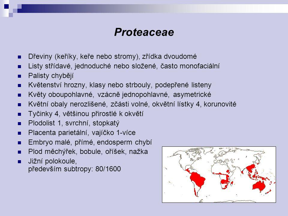 Proteaceae Dřeviny (keříky, keře nebo stromy), zřídka dvoudomé