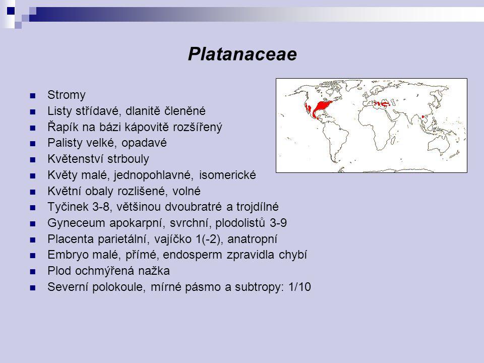 Platanaceae Stromy Listy střídavé, dlanitě členěné