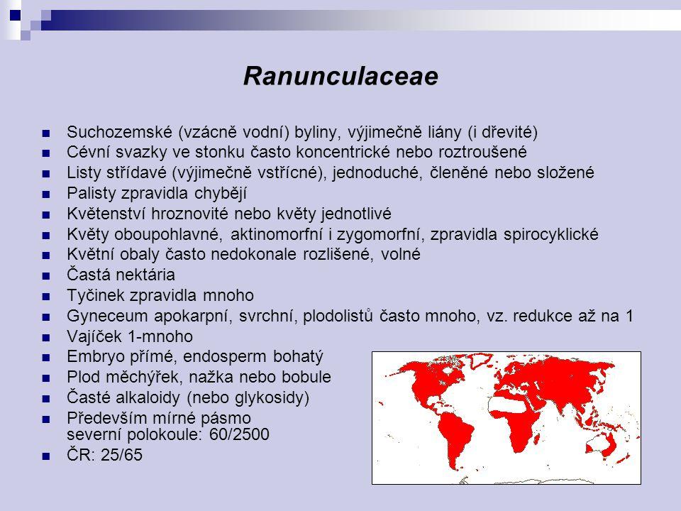 Ranunculaceae Suchozemské (vzácně vodní) byliny, výjimečně liány (i dřevité) Cévní svazky ve stonku často koncentrické nebo roztroušené.