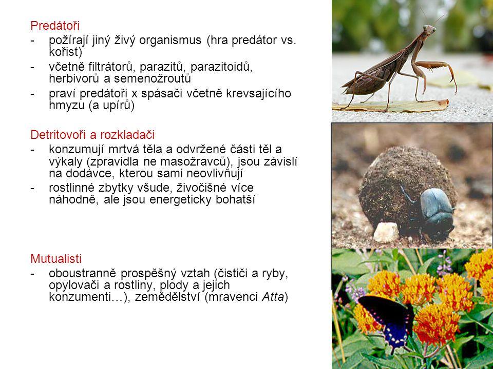 Predátoři - požírají jiný živý organismus (hra predátor vs. kořist) včetně filtrátorů, parazitů, parazitoidů, herbivorů a semenožroutů.