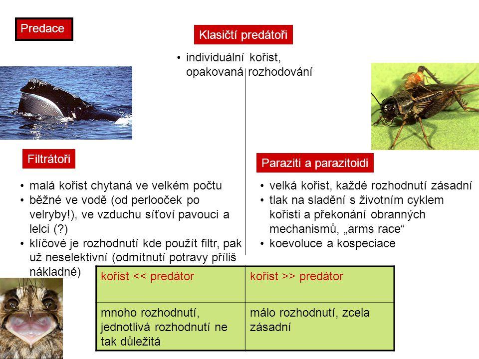 Predace Klasičtí predátoři. individuální kořist, opakovaná rozhodování. Filtrátoři. Paraziti a parazitoidi.