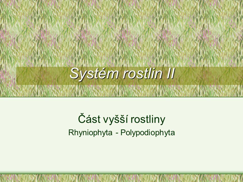 Část vyšší rostliny Rhyniophyta - Polypodiophyta