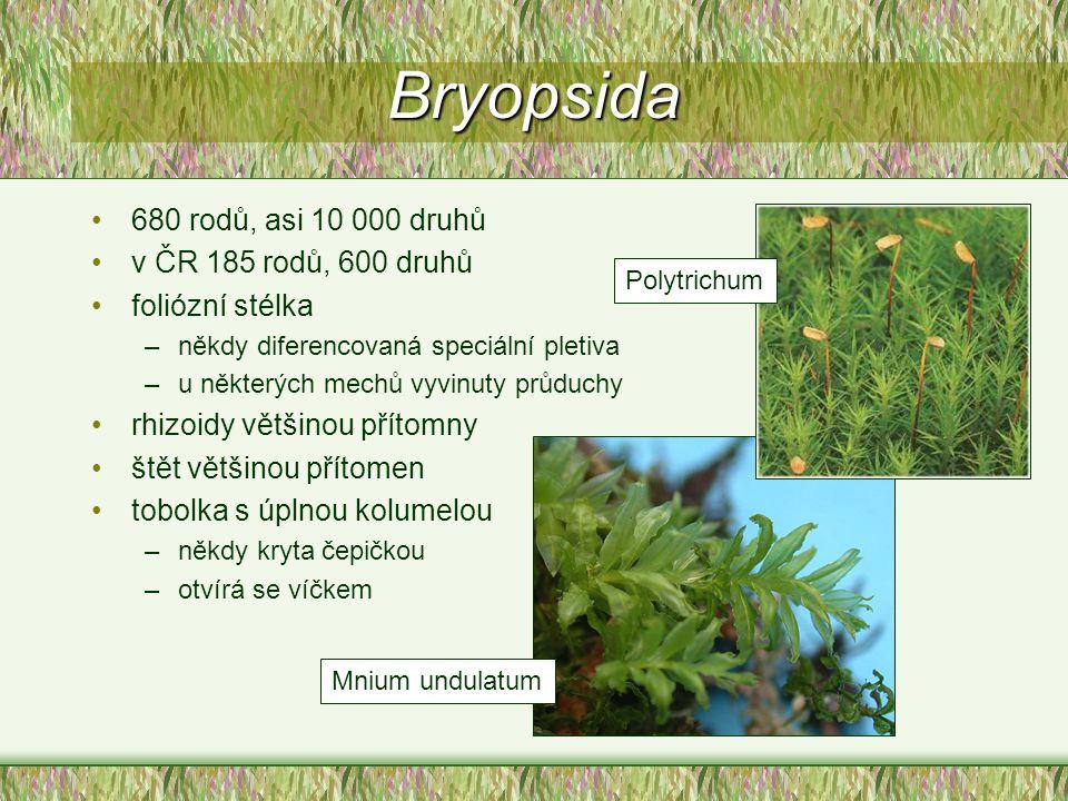 Bryopsida 680 rodů, asi 10 000 druhů v ČR 185 rodů, 600 druhů