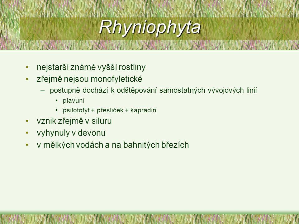 Rhyniophyta nejstarší známé vyšší rostliny zřejmě nejsou monofyletické
