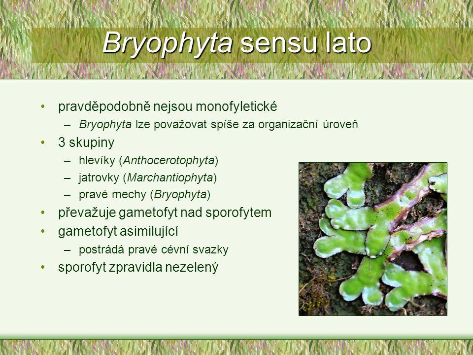 Bryophyta sensu lato pravděpodobně nejsou monofyletické 3 skupiny