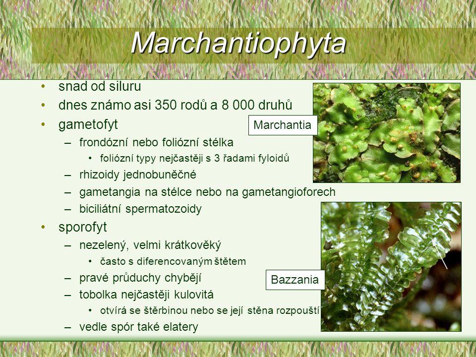 Marchantiophyta snad od siluru dnes známo asi 350 rodů a 8 000 druhů