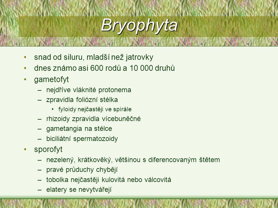 Bryophyta snad od siluru, mladší než jatrovky
