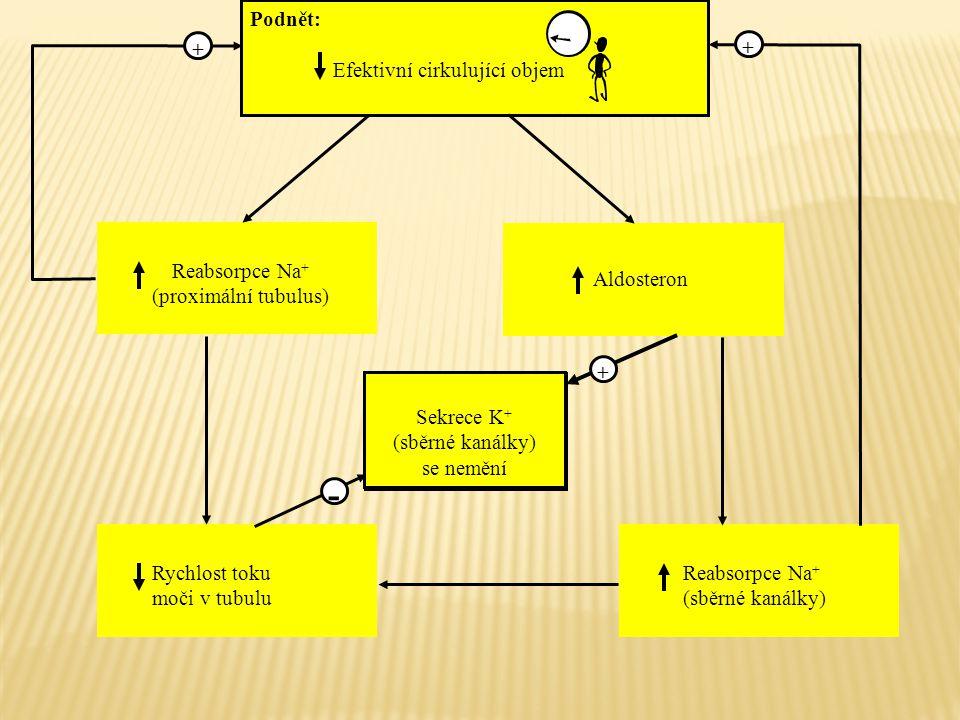 - + + + Podnět: Efektivní cirkulující objem Reabsorpce Na+