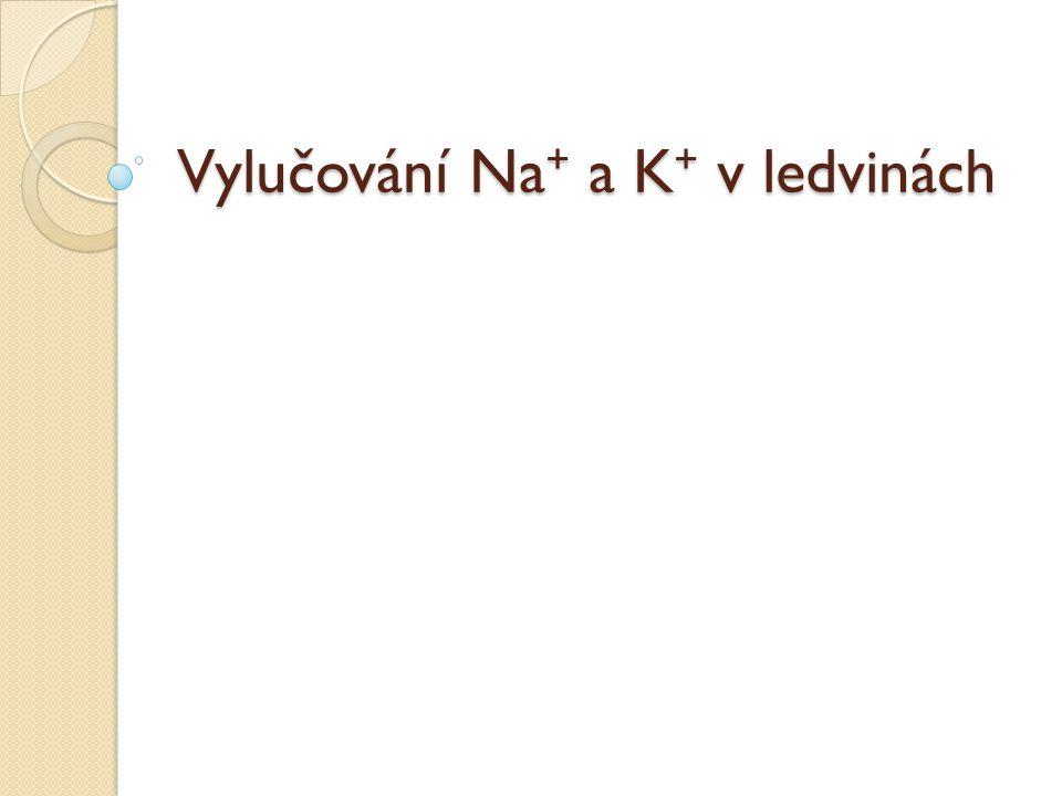 Vylučování Na+ a K+ v ledvinách