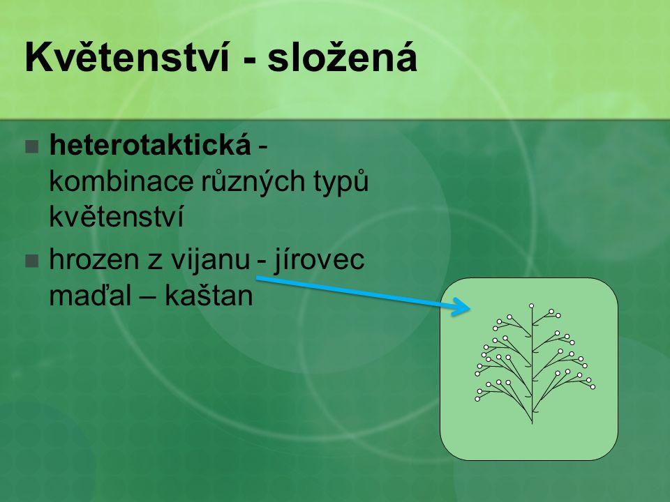 Květenství - složená heterotaktická - kombinace různých typů květenství.
