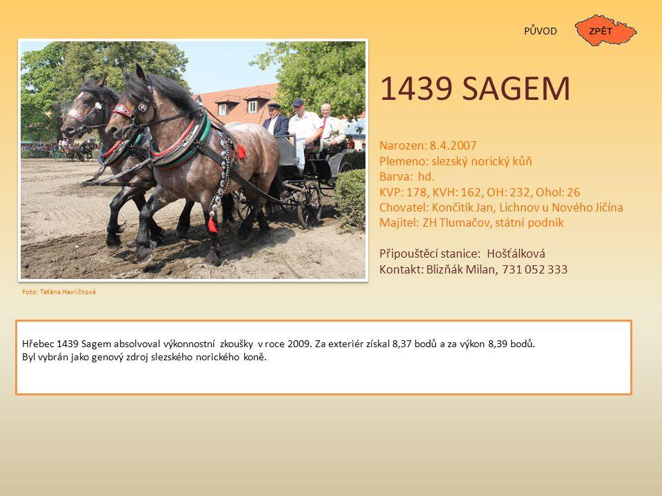 1439 SAGEM Narozen: 8.4.2007 Plemeno: slezský norický kůň Barva: hd.