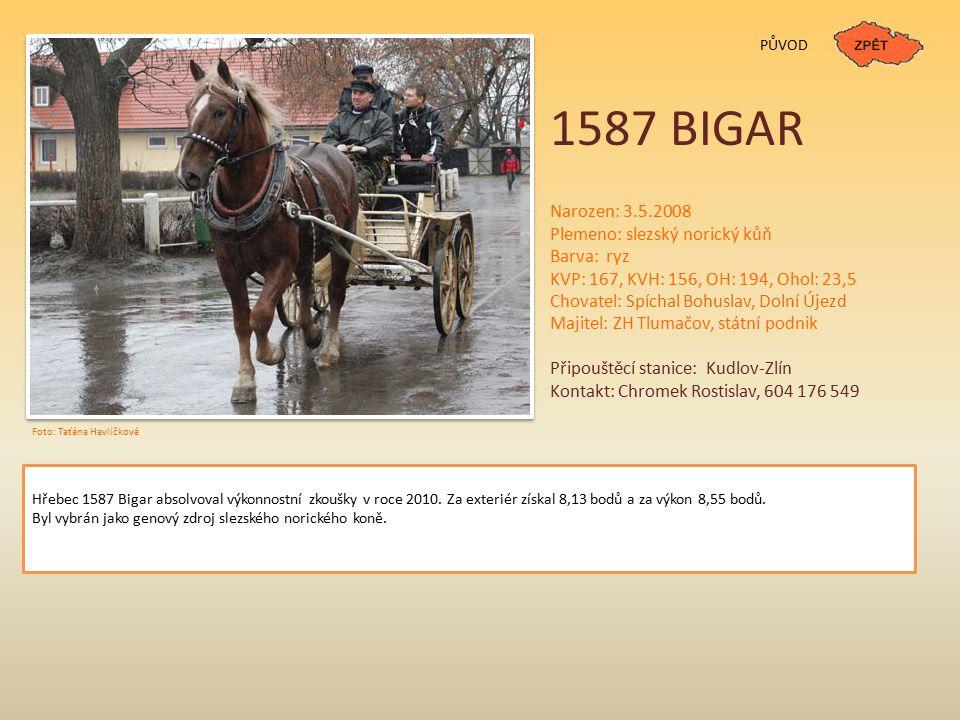 1587 BIGAR Narozen: 3.5.2008 Plemeno: slezský norický kůň Barva: ryz