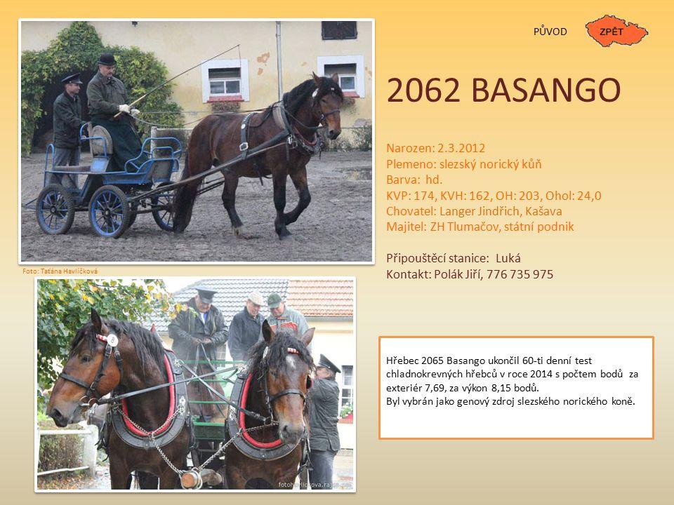 2062 BASANGO Narozen: 2.3.2012 Plemeno: slezský norický kůň Barva: hd.