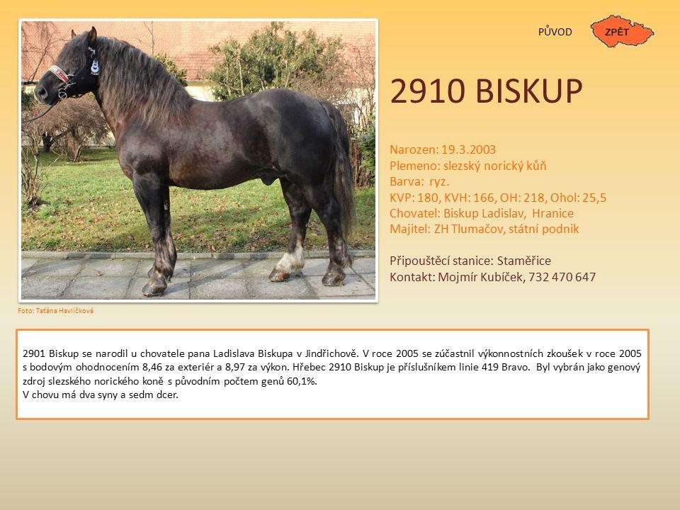 2910 BISKUP Narozen: 19.3.2003 Plemeno: slezský norický kůň