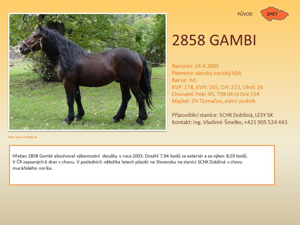 2858 GAMBI Narozen: 24.4.2001 Plemeno: slezský norický kůň Barva: hd.