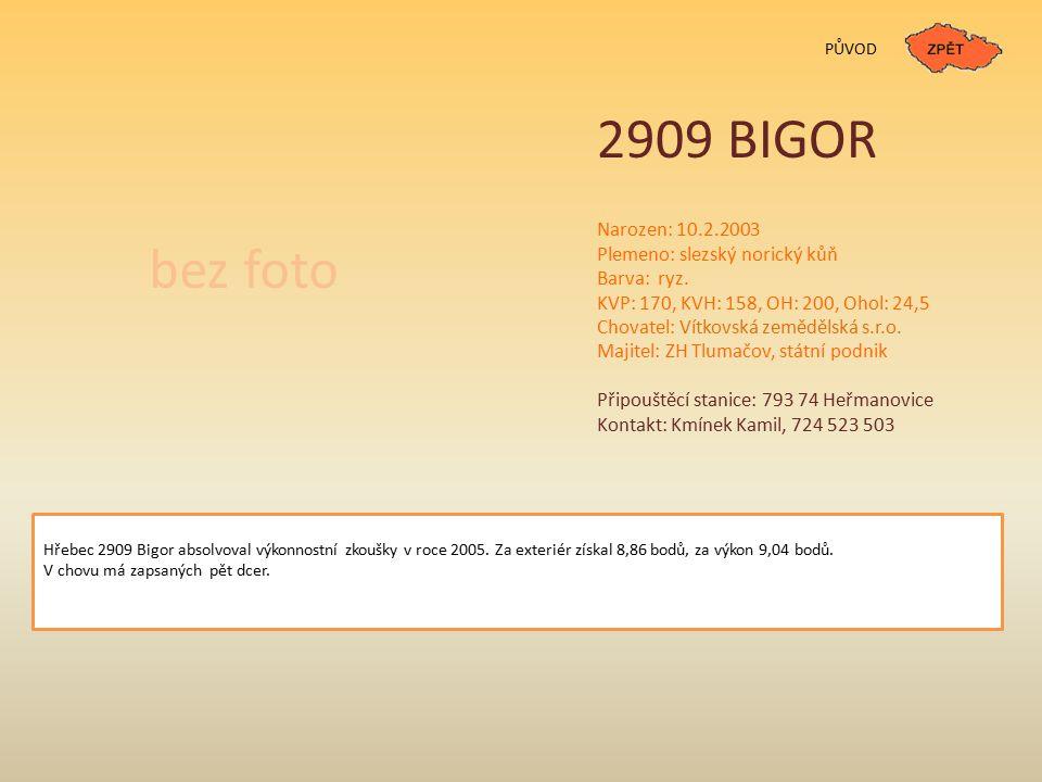2909 BIGOR bez foto Narozen: 10.2.2003 Plemeno: slezský norický kůň