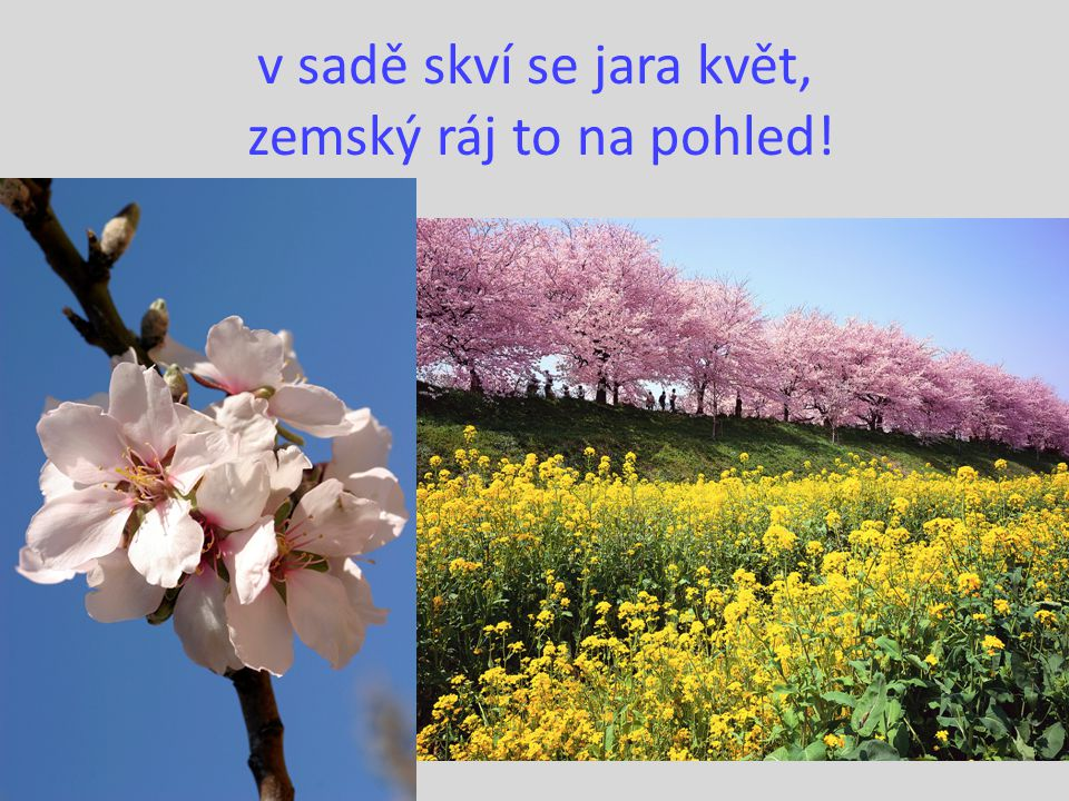 v sadě skví se jara květ, zemský ráj to na pohled!