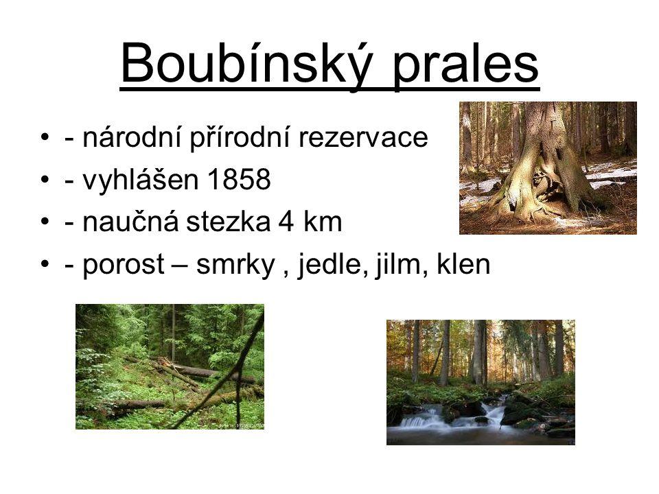 Boubínský prales - národní přírodní rezervace - vyhlášen 1858
