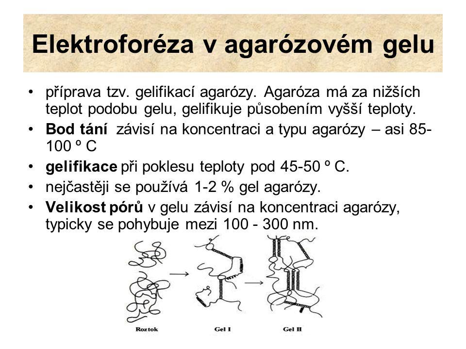 Elektroforéza v agarózovém gelu