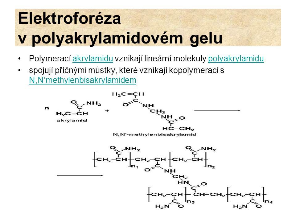 Elektroforéza v polyakrylamidovém gelu