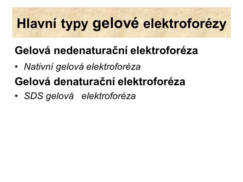 Hlavní typy gelové elektroforézy