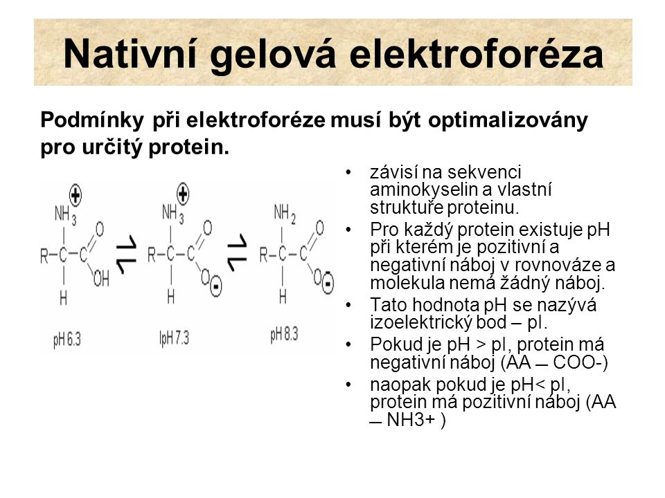 Nativní gelová elektroforéza