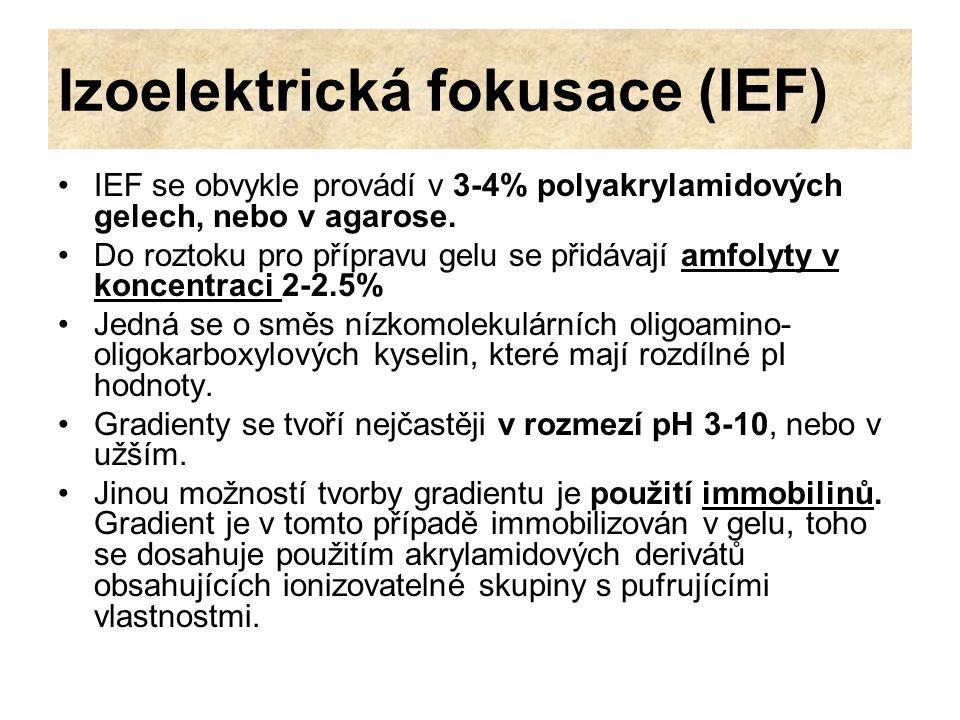 Izoelektrická fokusace (IEF)
