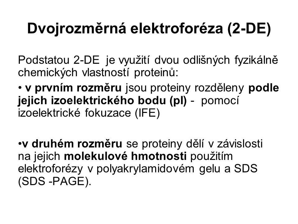 Dvojrozměrná elektroforéza (2-DE)