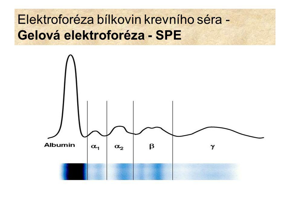 Elektroforéza bílkovin krevního séra - Gelová elektroforéza - SPE
