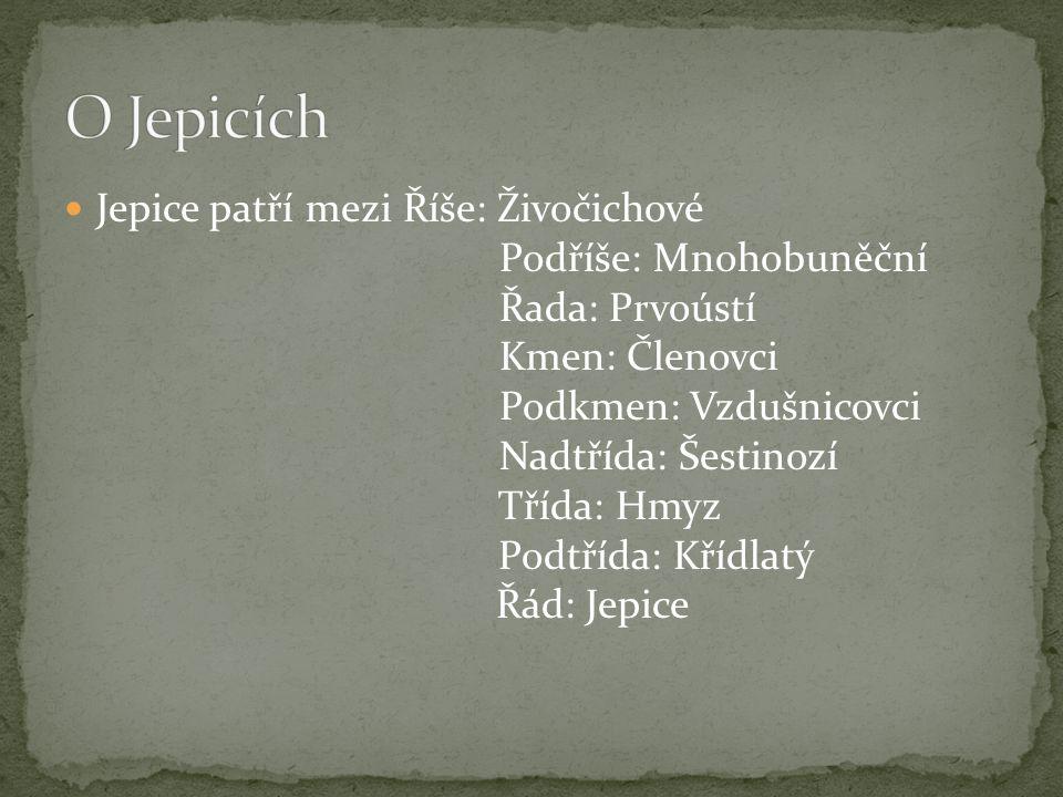 O Jepicích